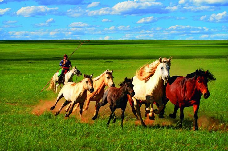 """骑在马背上的城市,拥有18000匹骏马,号称""""中国"""