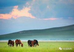 天边草原乌拉盖、给你个旅行的理由